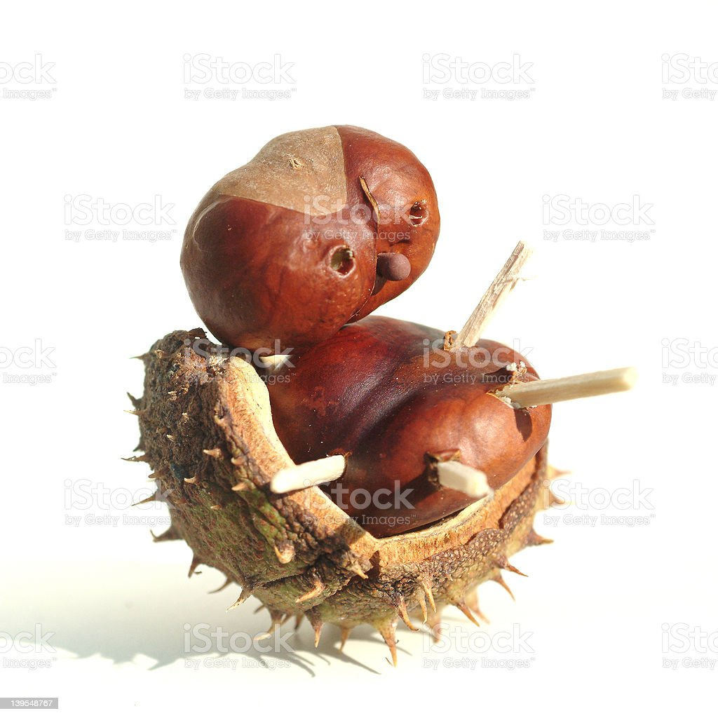 chestnut man two stock photo