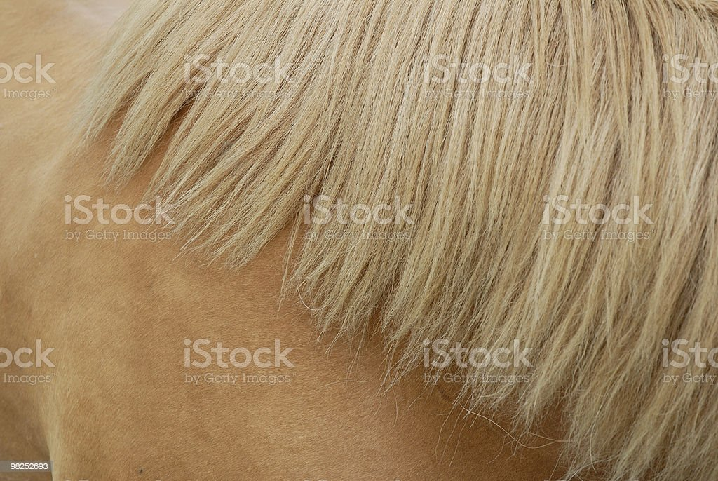 chestnut mane royalty-free stock photo