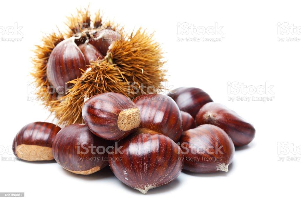Chestnut on white royalty-free stock photo