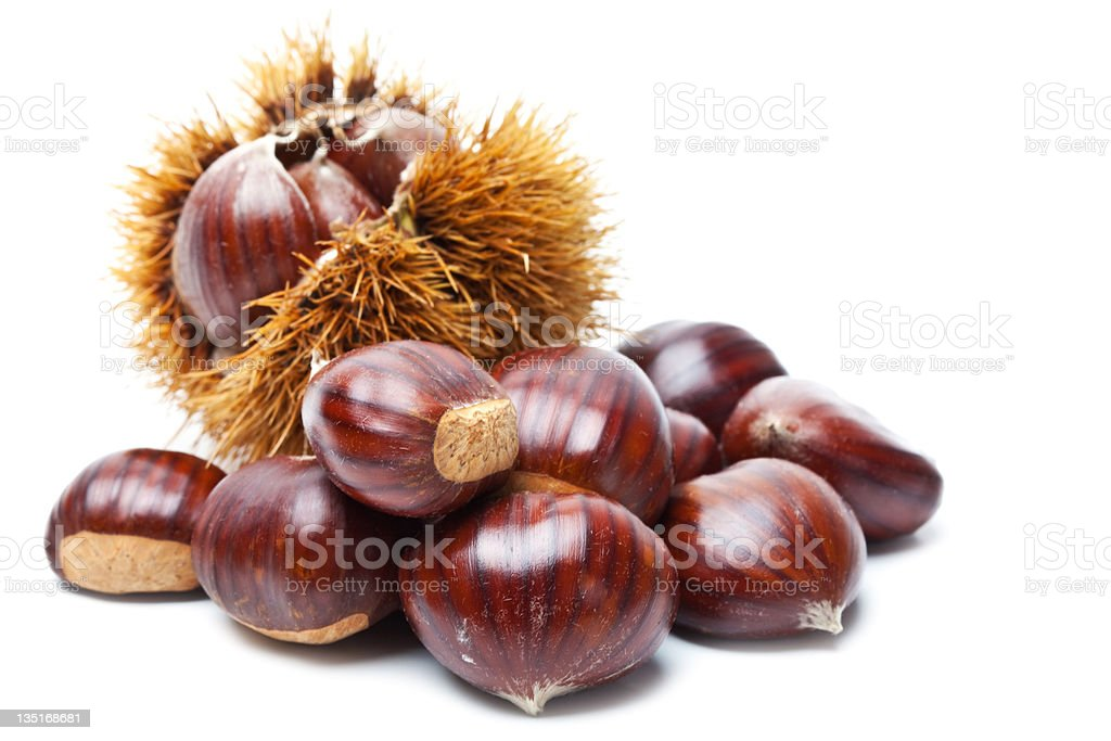 Chestnut on white stock photo