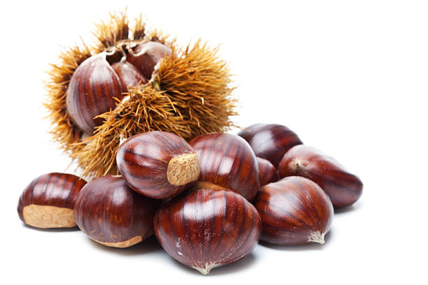 Chestnut on white stock photo