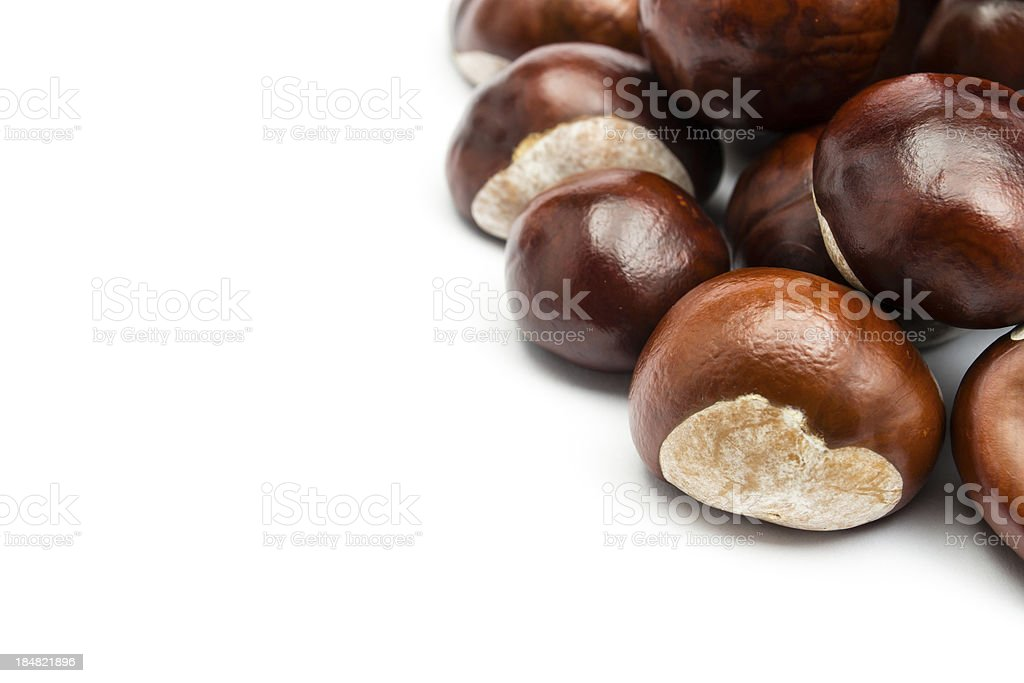 Chestnut royalty-free stock photo
