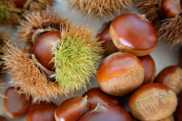 chestnut - kastanienhonig stock-fotos und bilder