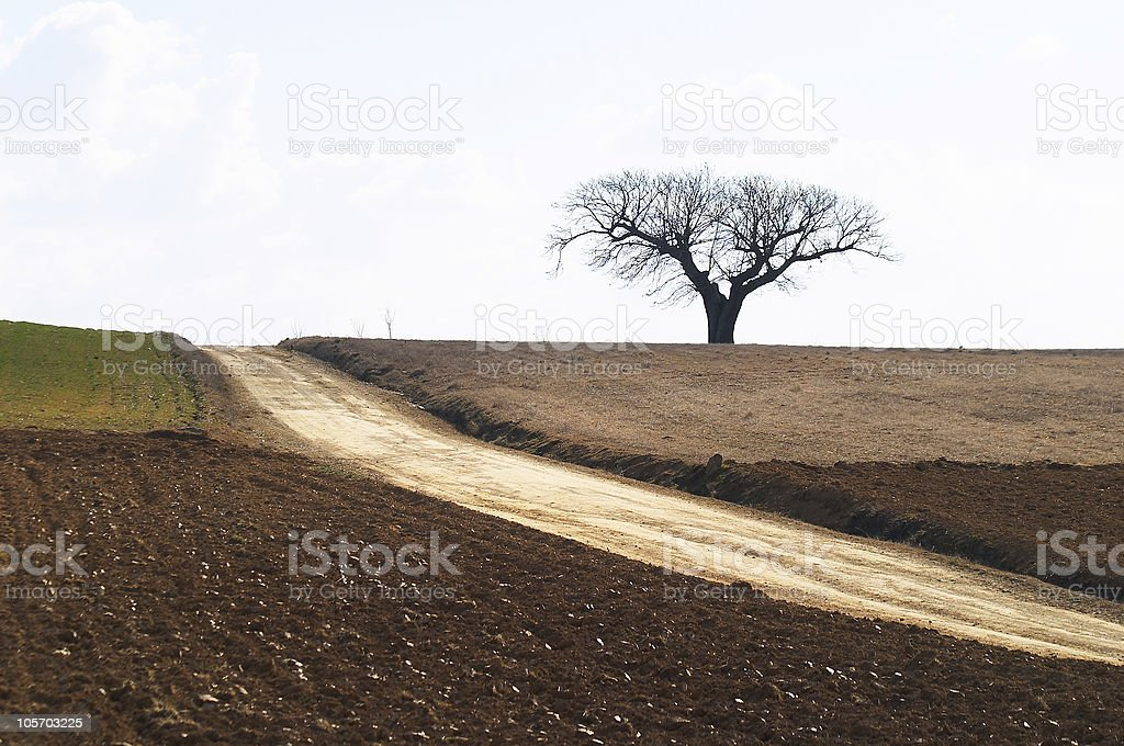 chestnut tree and fields royalty-free stock photo