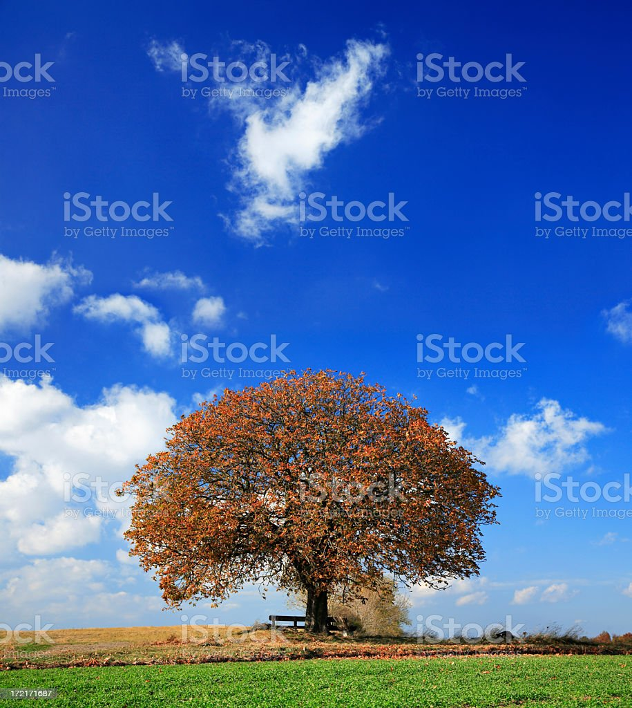 Chestnut Tree in Autumn royalty-free stock photo