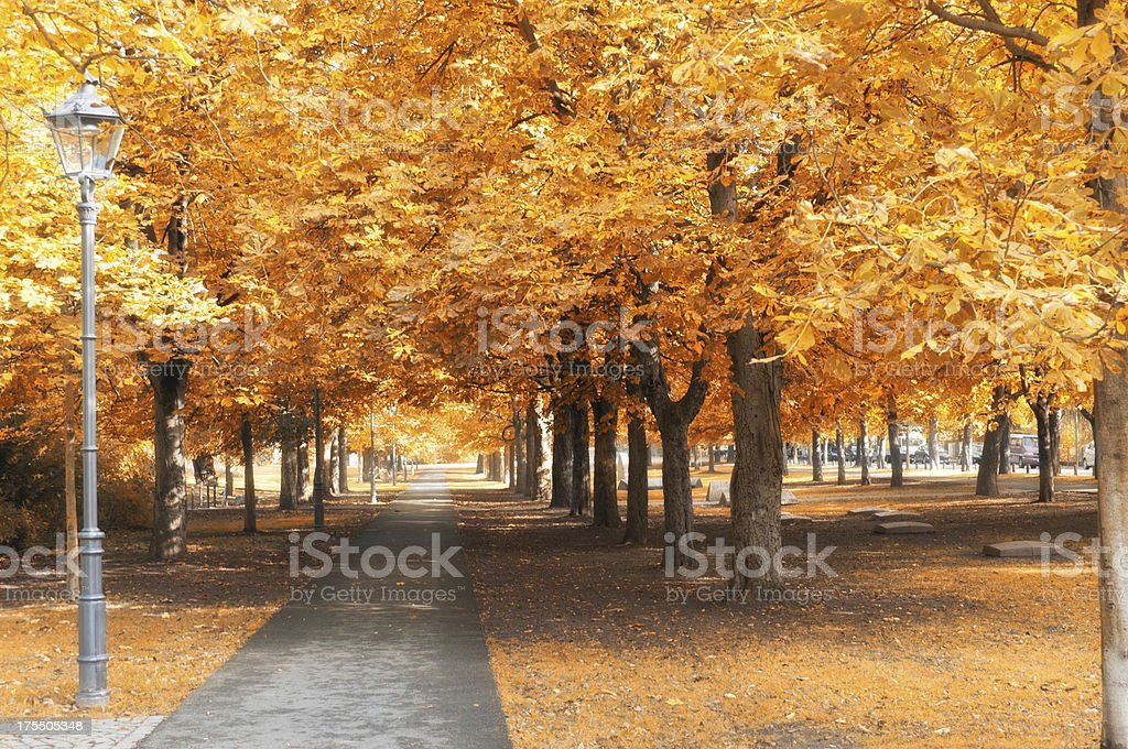 chestnut trees in atumn royalty-free stock photo