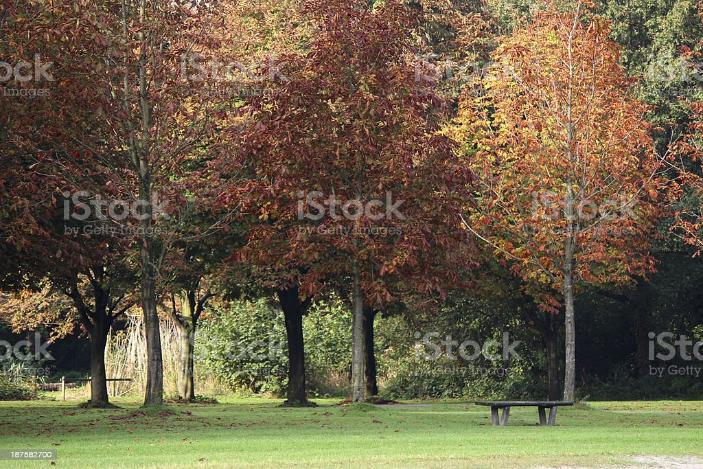 Chestnut trees with wooden bench  in autumn stock photo