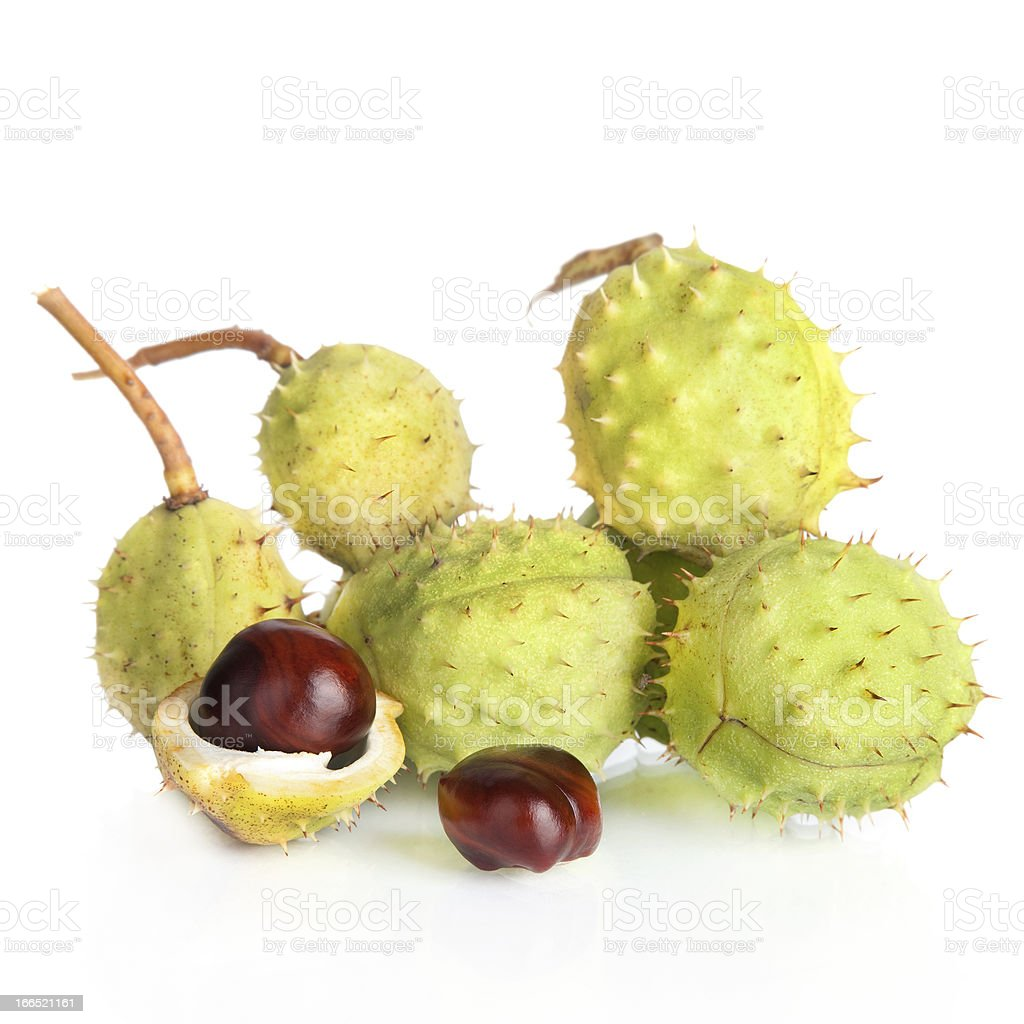 Chestnut with crust isolated on white background royalty-free stock photo