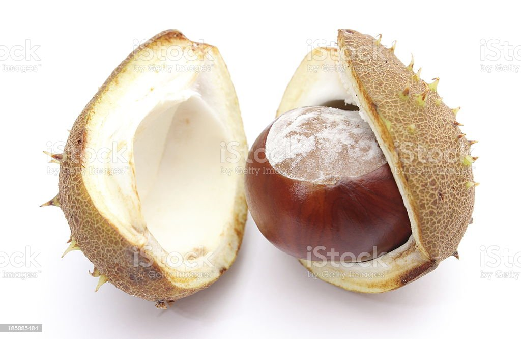 Chestnut with crust on a white background royalty-free stock photo