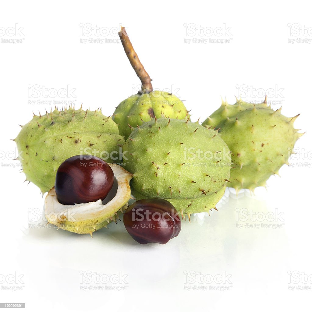 Chestnut with crust royalty-free stock photo