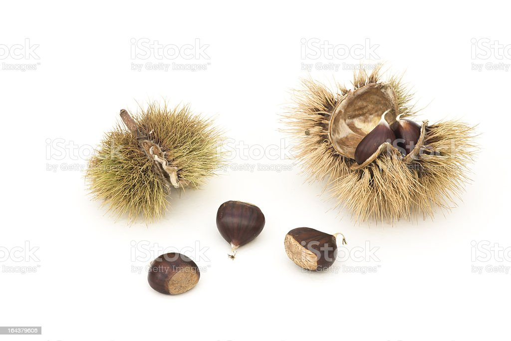 Chestnuts and Husks stock photo