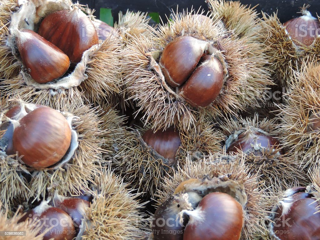 Chestnuts at Market stock photo