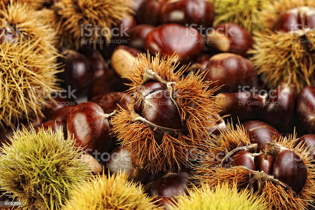 chestnuts  nature background stock photo