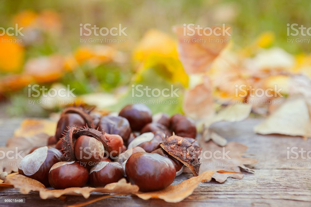 Chestnuts on fallen leaves stock photo