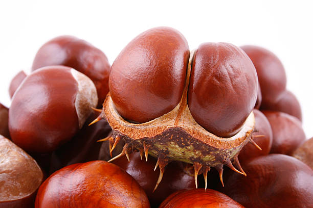 chestnuts pile of chestnuts isolated on white cusp stock pictures, royalty-free photos & images