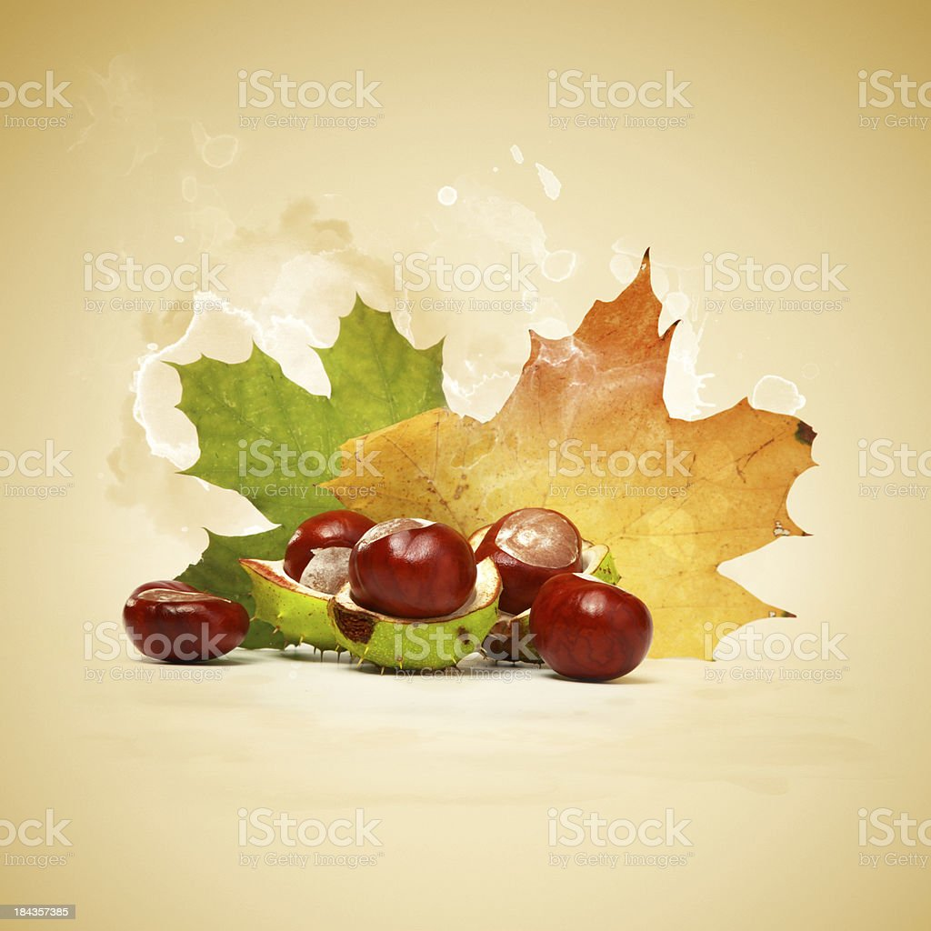 Chestnuts with leaves royalty-free stock photo
