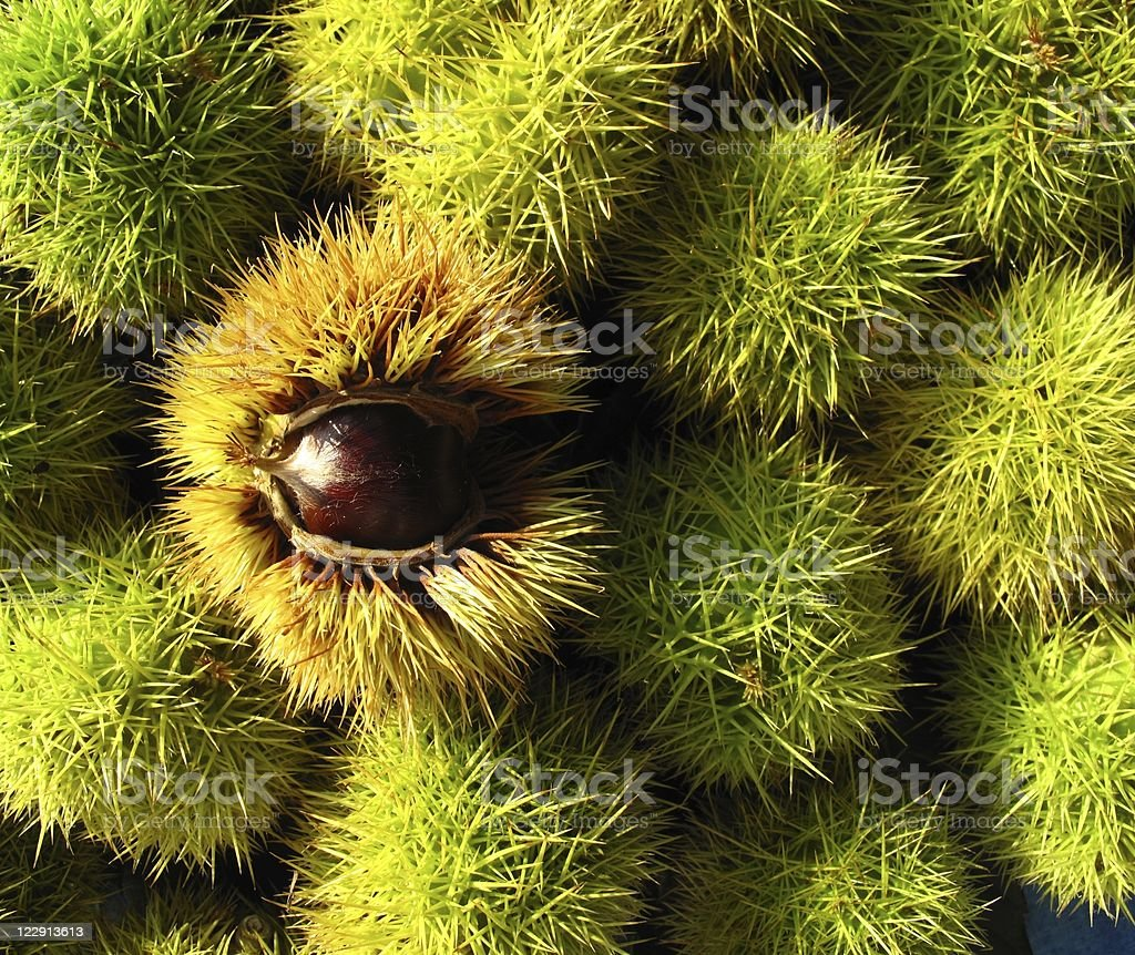 Chestnuts-background royalty-free stock photo