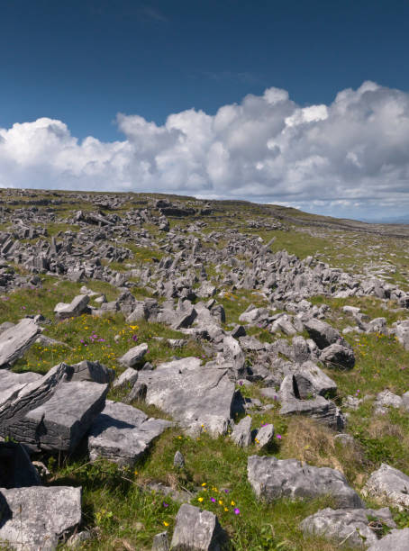 Cheval de fries field of Dun Aonghasa (Dun Aengus) with wildflowers, Inishmore This defensive structure called a Cheval de fries field surrounds Dun Aonghasa (Dun Aengus).  This northwest view looks across the field and surrounding defensive walls.  It is an early June day and, in the foreground, are colorful wildflowers among the limestone shards and blocks.  Inishmore, Aran Islands, County Galway, Ireland. michael stephen wills aran stock pictures, royalty-free photos & images