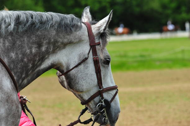 cheval - horse bit stock photos and pictures