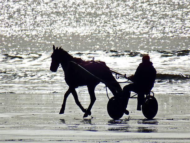 cheval trotteur stock photo