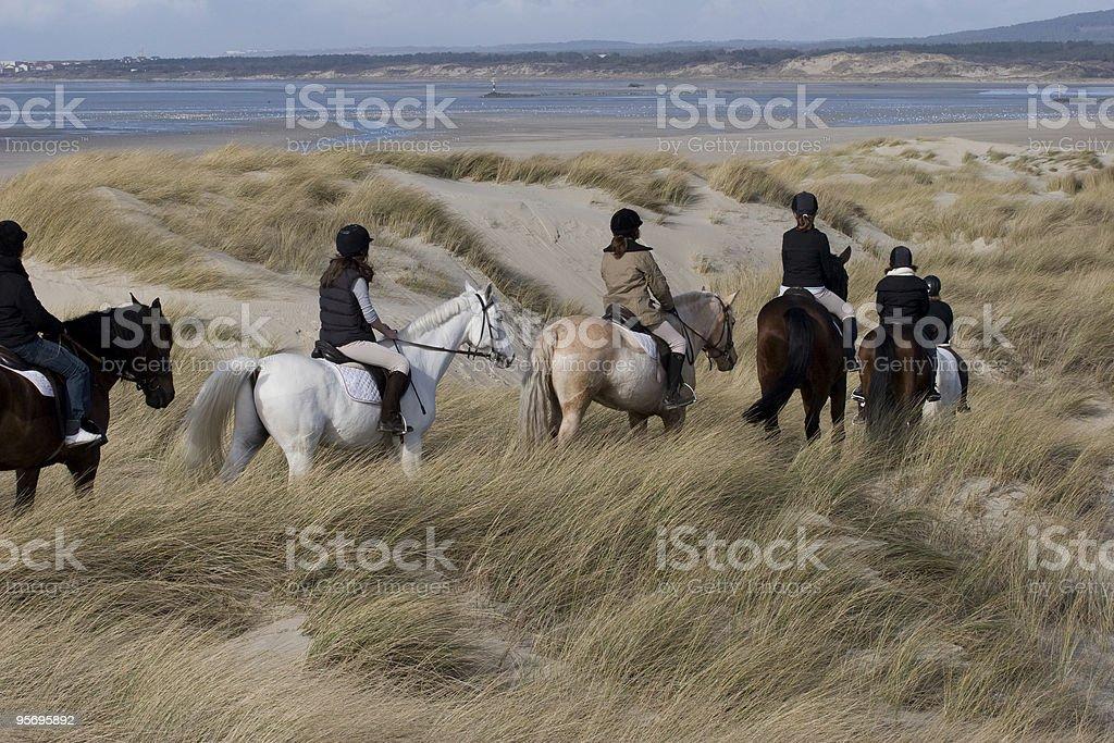 chevaux dans les dunes royalty-free stock photo