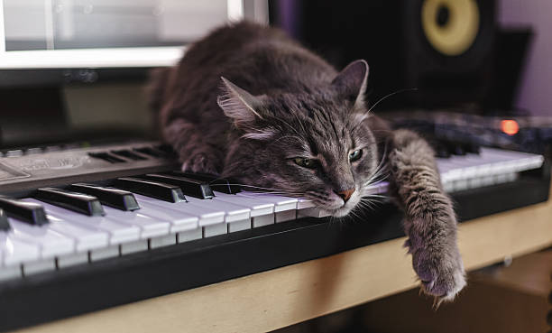 Chewie the cat has tired of making music stock photo