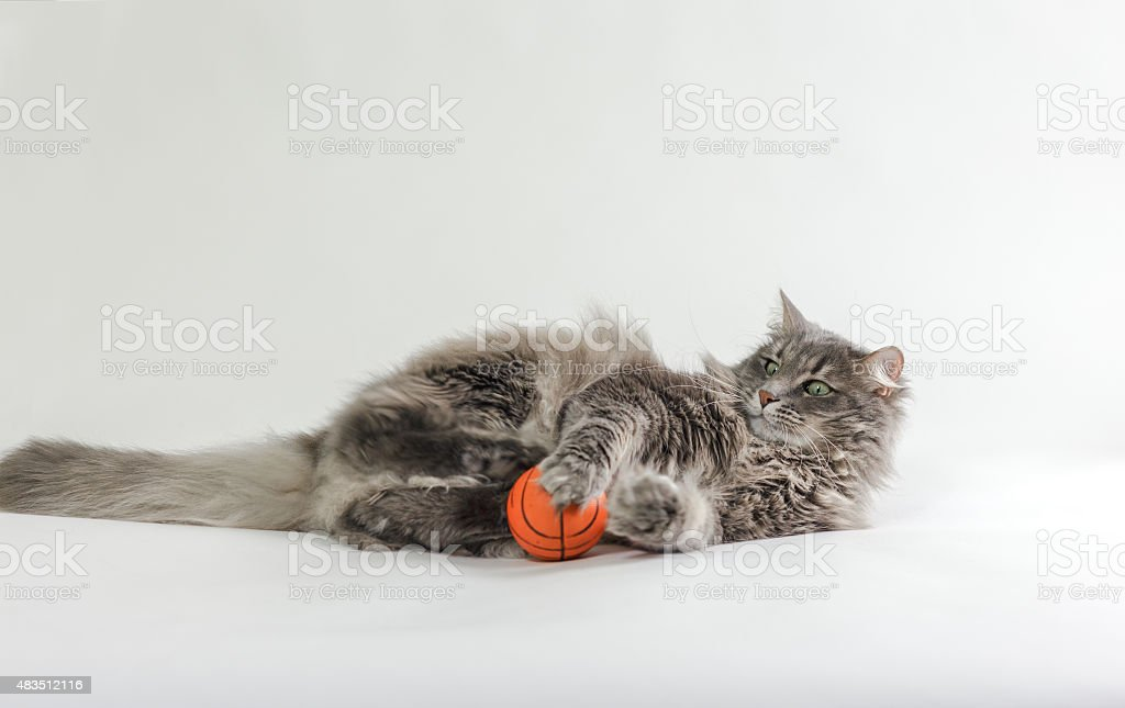 Chewie the cat playing with a ball stock photo