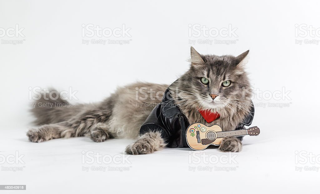 Chewie the cat with a toy guitar stock photo