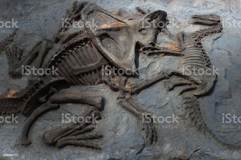Chiang Mai, Thailand - 20/08/2017: Dinosaur fossil model at hidden village park in Chiang Mai, Thailand. stock photo