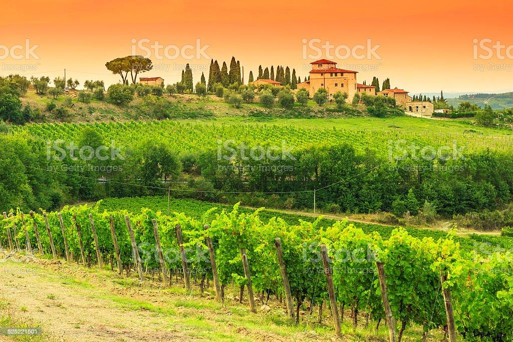 Chianti vineyard landscape with stone house,Tuscany,Italy,Europe stock photo