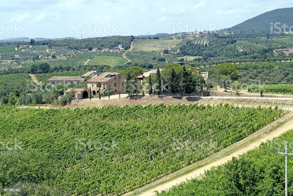 Chianti (Tuscany), Vineyards and olive trees, rural landscape royalty-free stock photo