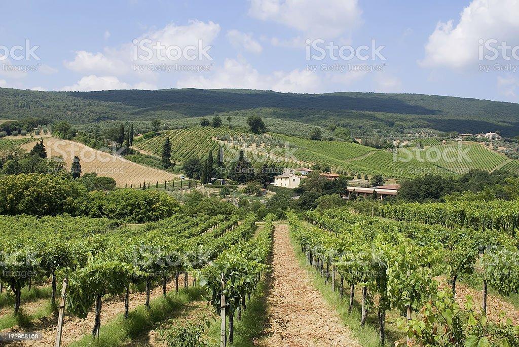 Chianti vineyards royalty-free stock photo