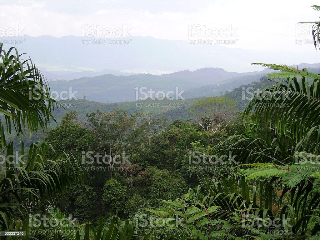 Chiapas tropical rainforest panorama, Mexico stock photo