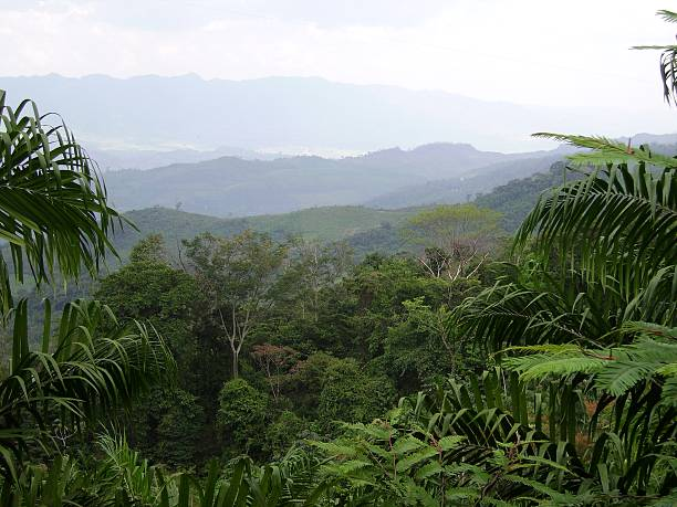 Chiapas tropical rainforest panorama, Mexico stock photo