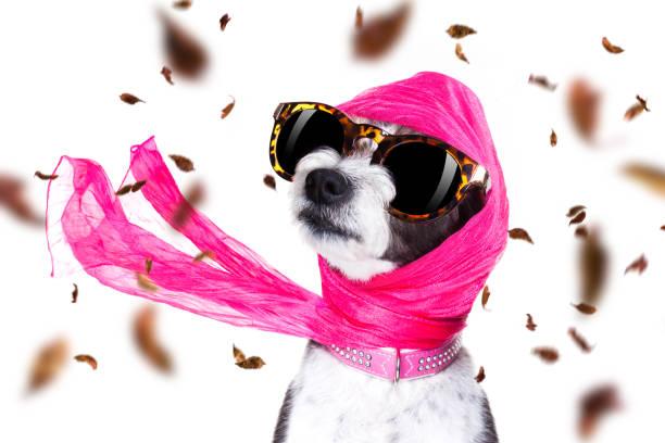 chic Diva Hund im Herbst oder herbst windig – Foto