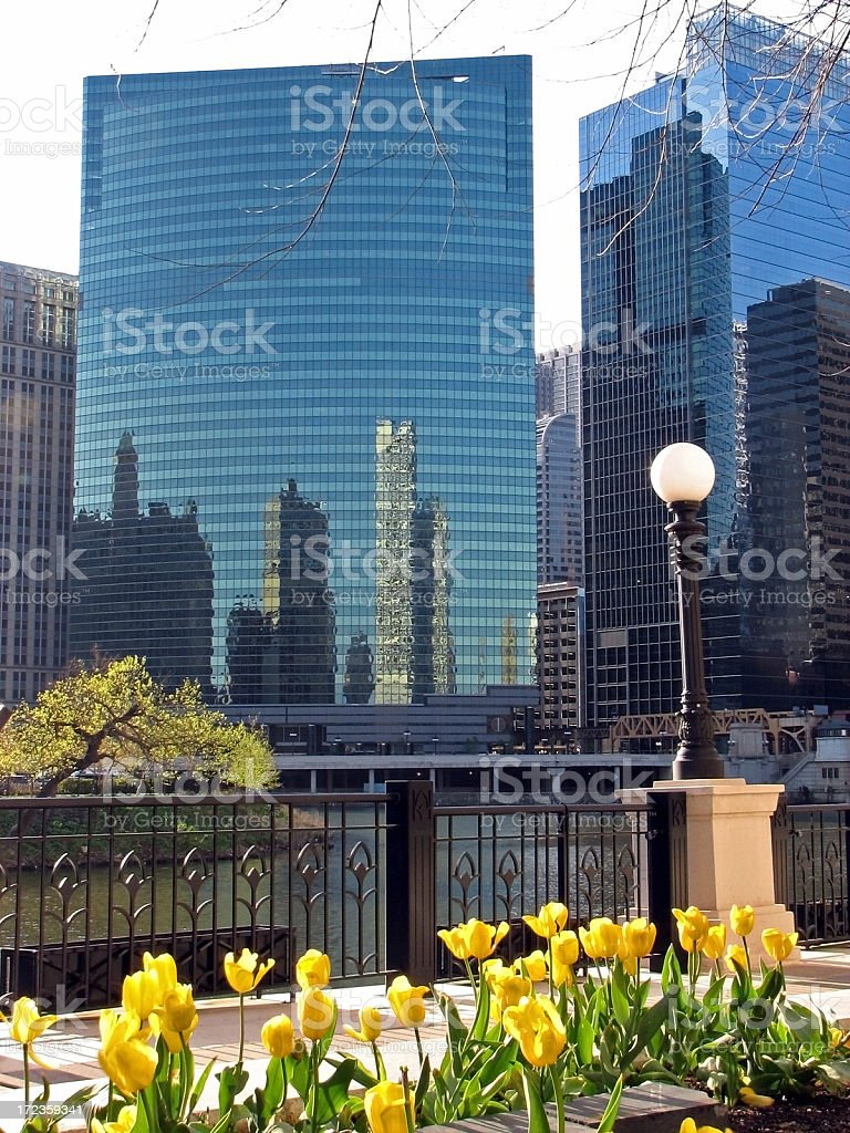 Chicago 333 West Wacker Drive and Yellow Tulips royalty-free stock photo