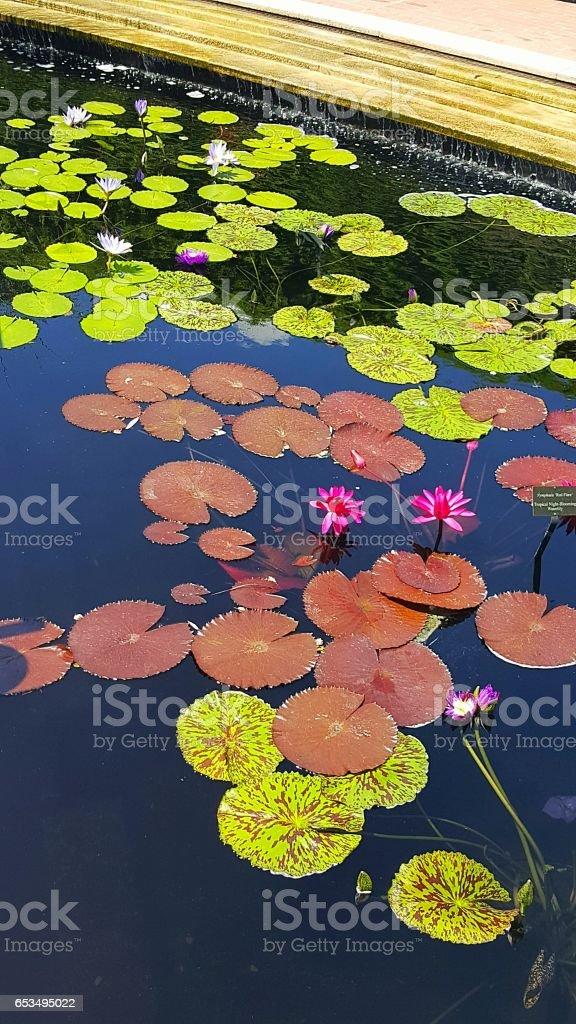 Chicago Botanic Garden stock photo