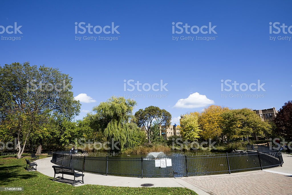 Chicago Duck Pond royalty-free stock photo