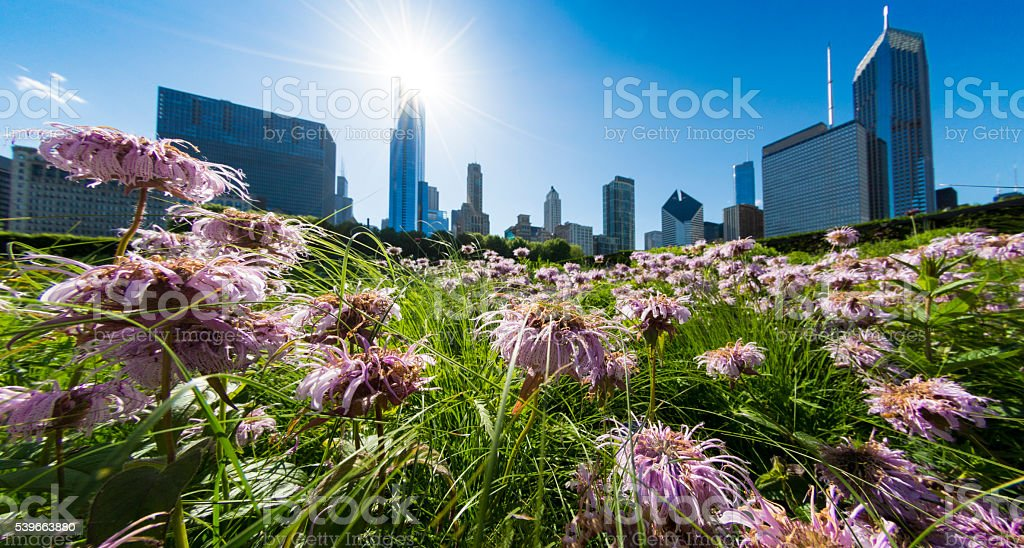 Chicago Park Skyline Flowers stock photo