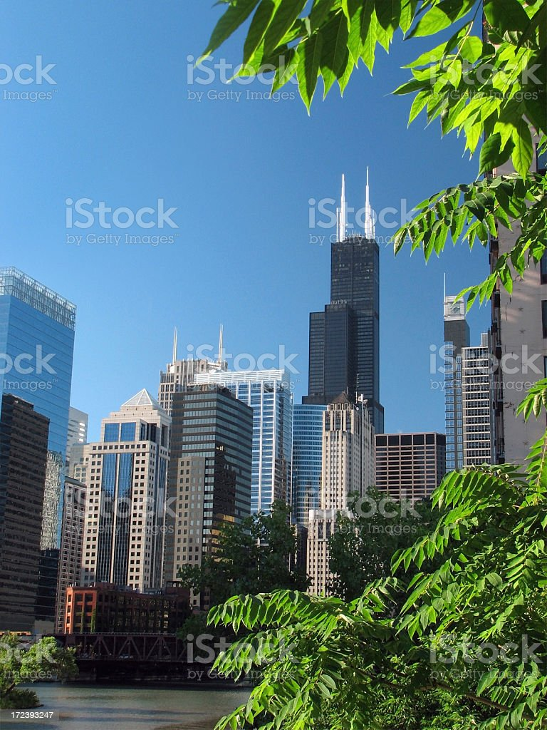 Chicago Sears Tower and Downtown royalty-free stock photo