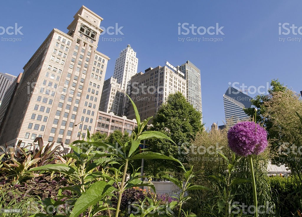 Chicago skyline and garden royalty-free stock photo