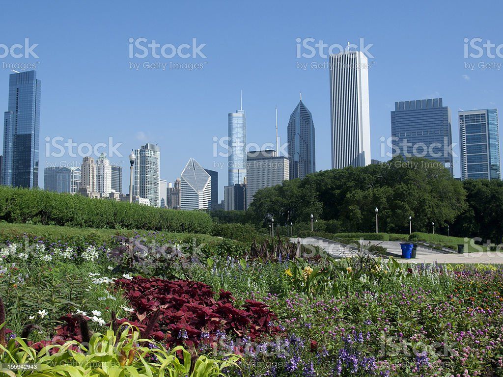 Chicago Skyline and Summer Flowers stock photo