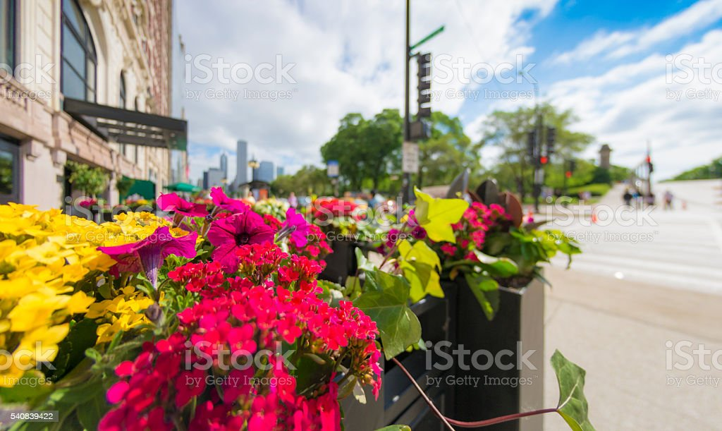 Chicago Street with Flowers stock photo