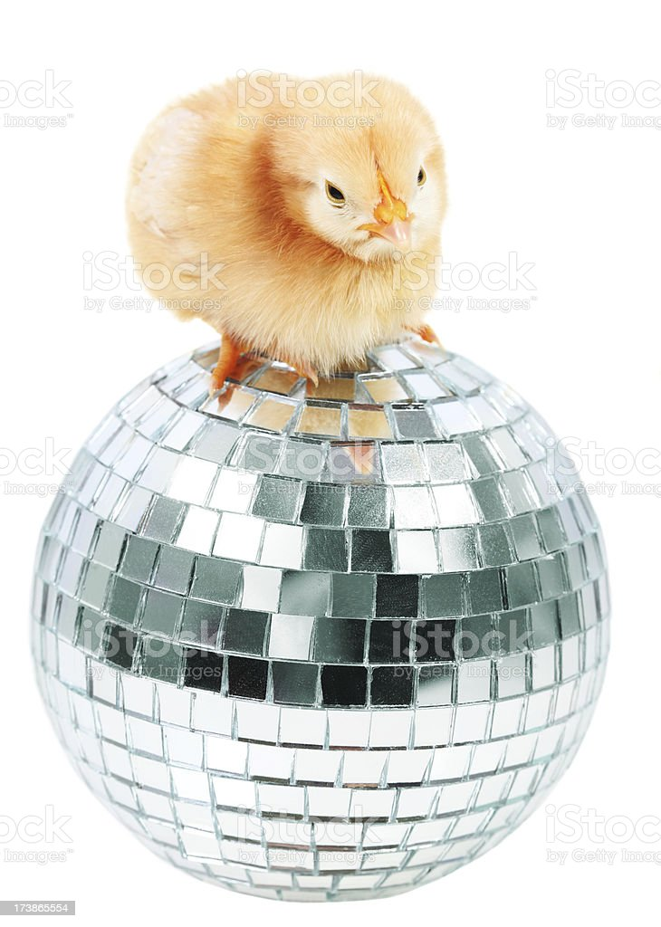 Chick and disco ball royalty-free stock photo