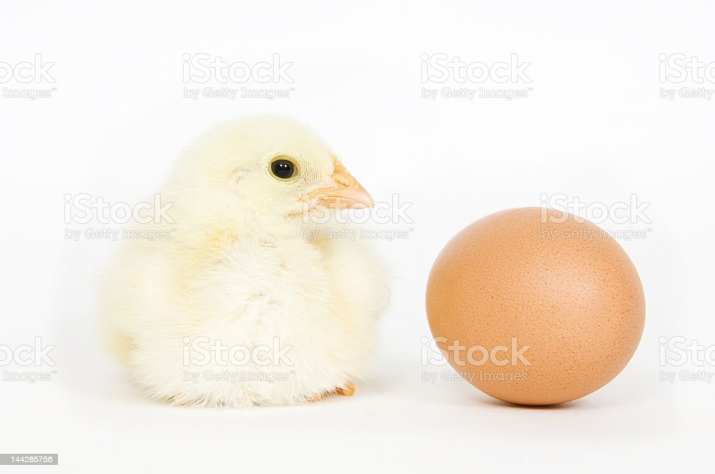 Chick and egg royalty-free stock photo