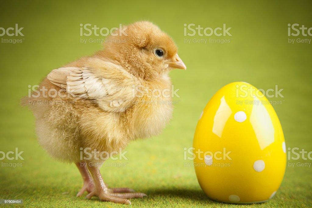 Chick et œufs photo libre de droits