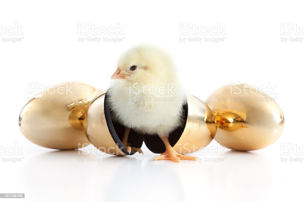 Chick and Eggs stock photo