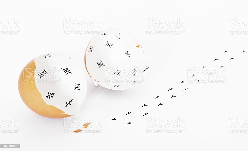 Chick escaped from egg concept royalty-free stock photo
