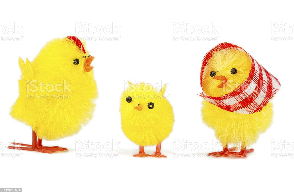 chick family royalty-free stock photo