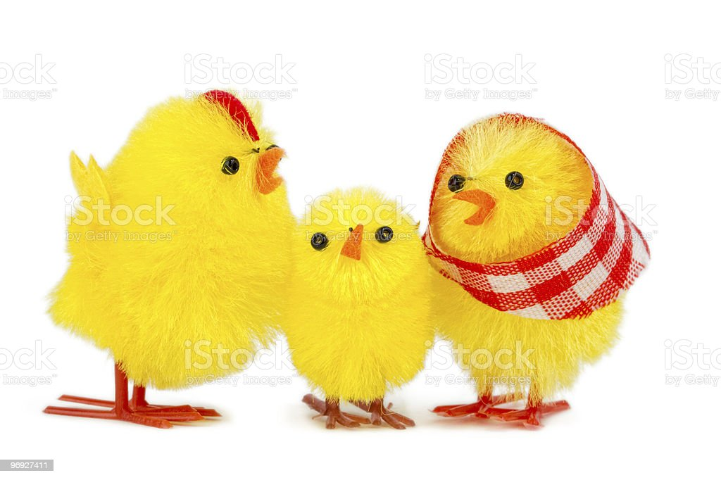 chick family royalty-free stock photo